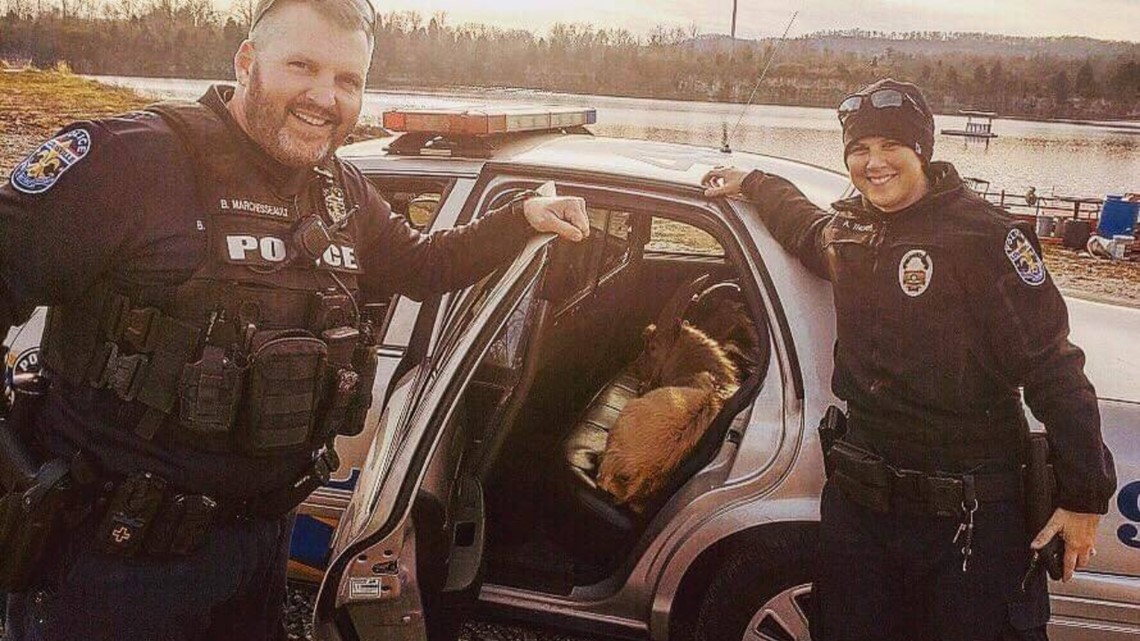 Police use Fritos to get pair of goats off interstate and back home