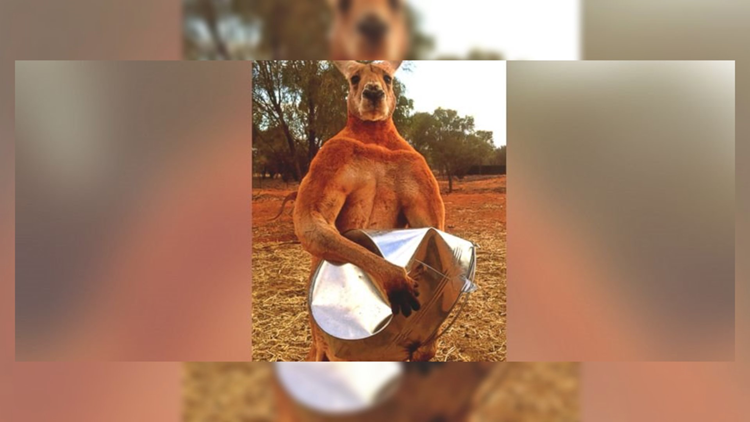 The Real Story Behind Roger the 'Roo