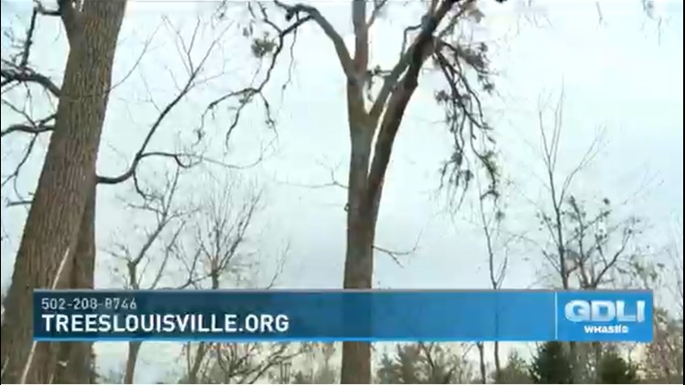 Give the gift that keeps on giving with Trees Louisville