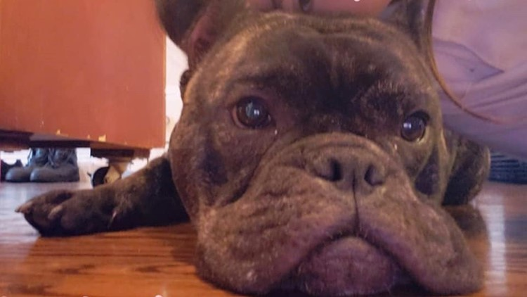 More than Christmas gifts stolen, a burglar took the family dog too