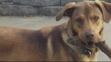 Woman warning others after her dog was shot and killed on Thanksgiving