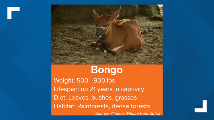 Bongo fun facts