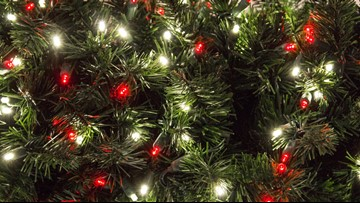 How do evergreen trees stay green?