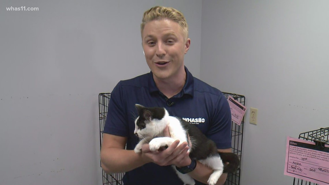 WHAS11, Kentucky Humane Society Giveathon to help shelter animals
