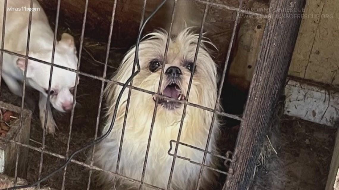 FOCUS investigates animal cruelty cases in Kentucky