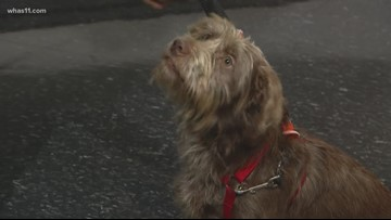 Pet of the Week: Charlie