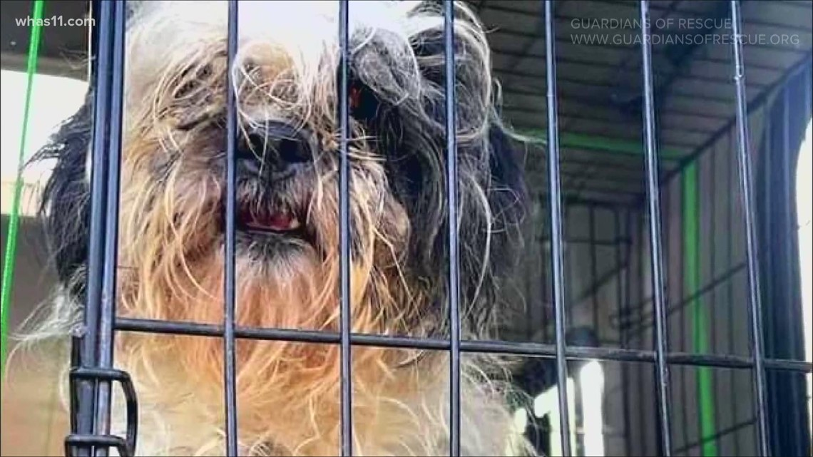 FOCUS   Animal advocates pushing for change in cruelty laws