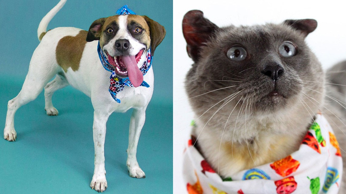 Celebrate Adopt a Shelter Pet Day by bringing home a new furry friend
