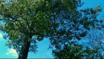 Louisville considers ordinance addressing city's tree canopy loss