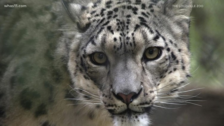 Louisville Zoo animals receive COVID-19 vaccine