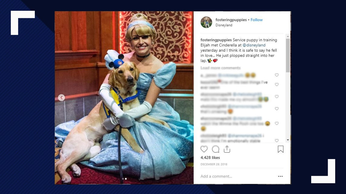 This Service Dog Met Cinderella At Disneyland And He Cant Stop