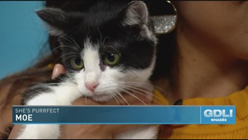 Tuxes and Tails helps homeless pets, in style