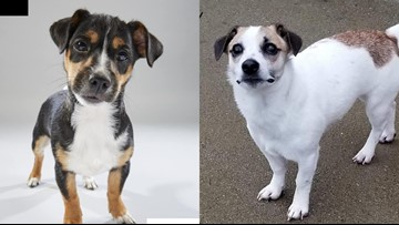 Two local puppies chosen for Animal Planet's 2019 Puppy Bowl
