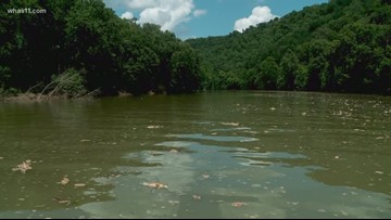 What is aeration, and how is it saving fish in the Kentucky River?
