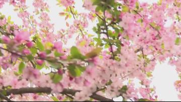 Enjoy the beauty of spring at Cave Hill Cemetery