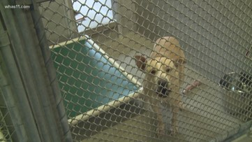 New law would take animal cruelty a felony