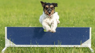 Top dogs show off their skills at dog show, agility trials