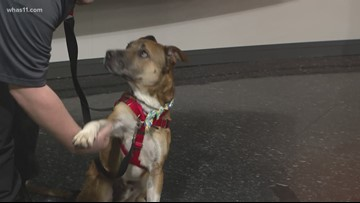 Pet of the Week: Ace