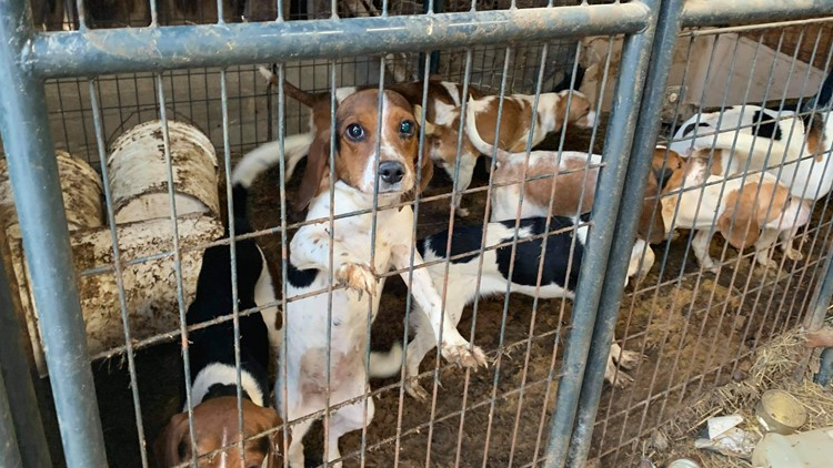 141 animals rescued from alleged puppy mill in Adair County