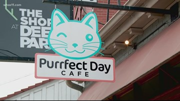 Cat Cafe surpasses goals with 1,000th adoption