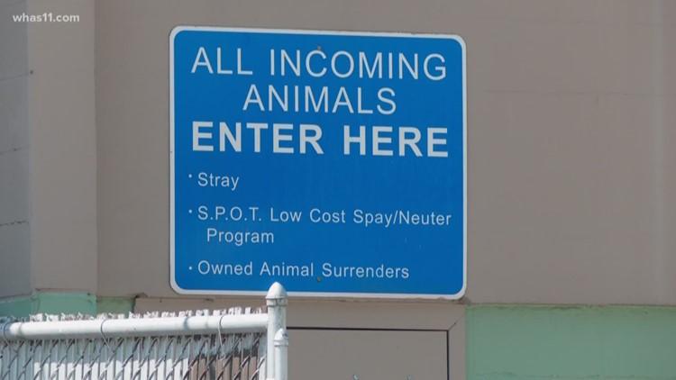 LMAS needs adoptions, donations to maintain no-kill status amid COVID-19 outbreak, FOMAS says