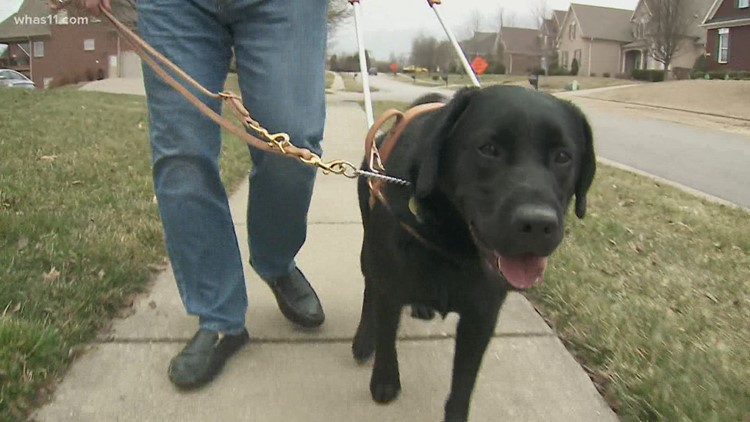 Pilot Dogs 'unleash' freedom for people without sight, hearing