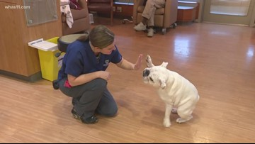Bulldog building relationships with Indiana cancer patients