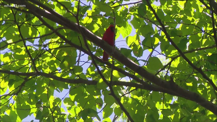 What's killing birds? Dead songbirds have now been found in more than 40 Indiana counties