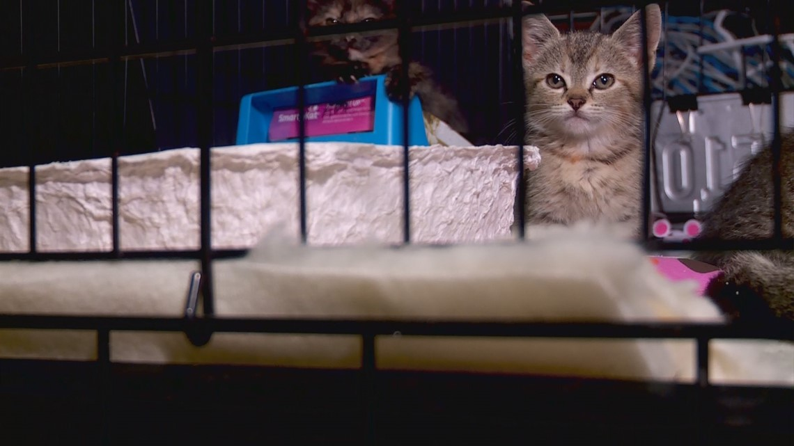 37 cats spared from euthanasia; No Kill Louisville searching for foster homes