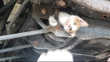 'Soap, sweat and prayers': Rescuers free cat stuck in car subframe for hours