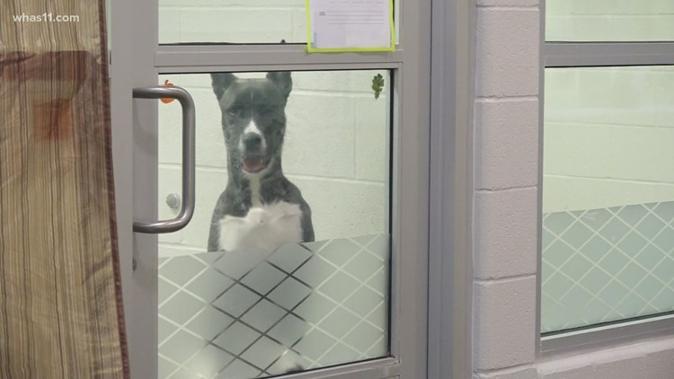 Empty the Shelter 2021: Louisville Metro Animal Services offering free pet adoptions