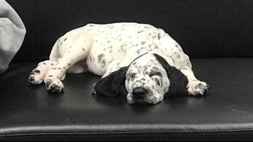 Shelby Co. Fire welcomes new puppy to the department