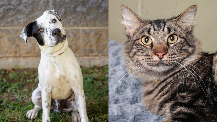 How you can help animals in Kentuckiana through the Kentucky Humane Society