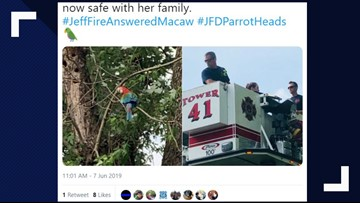 Jeffersonville Fire rescues macaw from tree