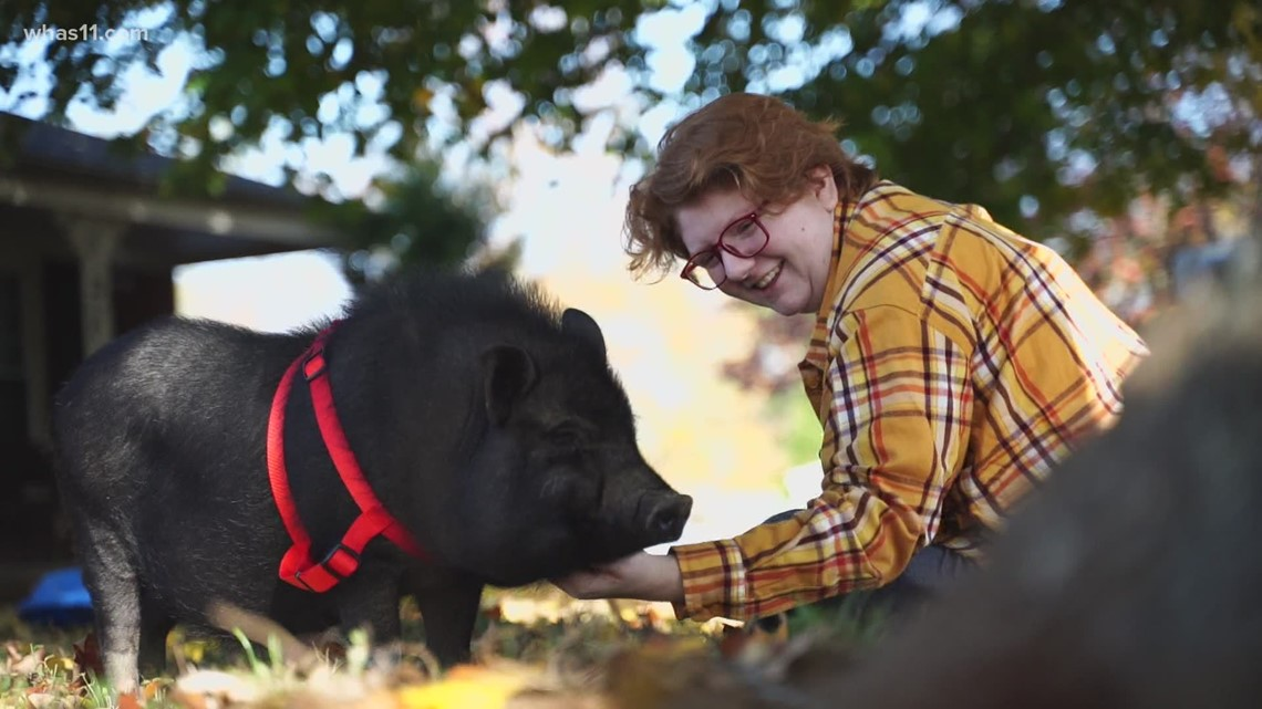 Mr. Hollywood: Pig captures hearts and attention in Shelbyville