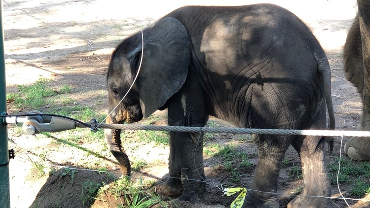 Baby elephant at Louisville Zoo