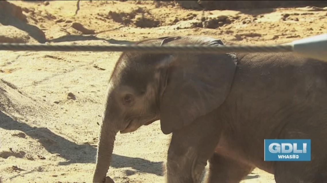 Meet + help name Louisville Zoo's new baby elephant