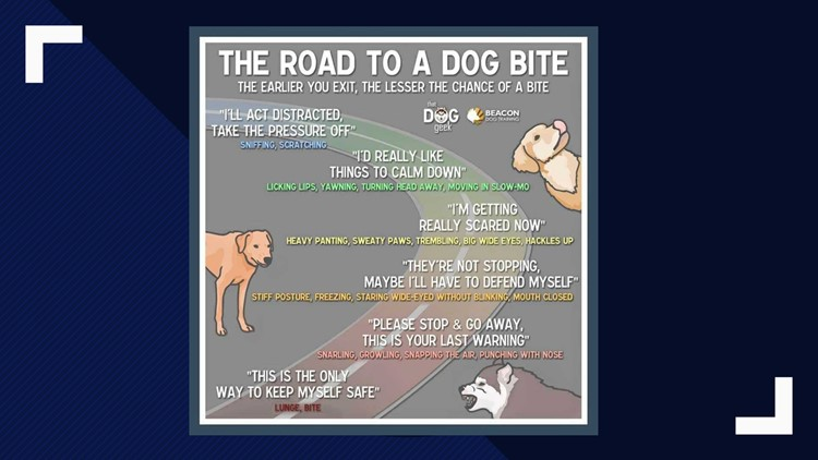 The Road To A Dog Bite