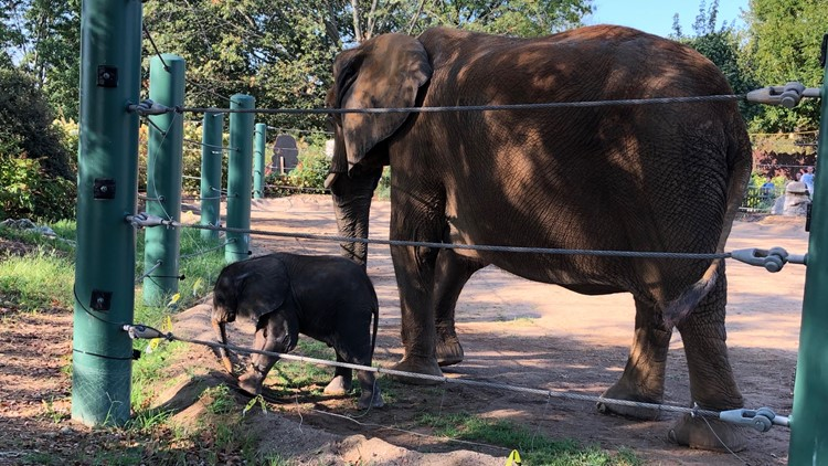 Mikki the elephant and her calf at the Louisville Zoo