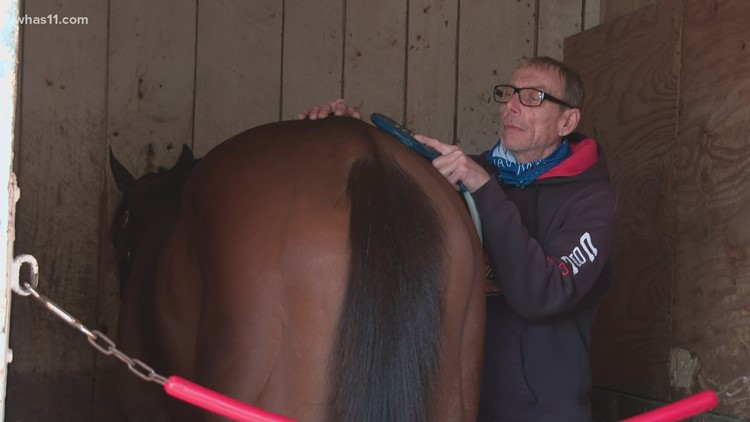 Horse trainers use a variety of methods to relieve pain