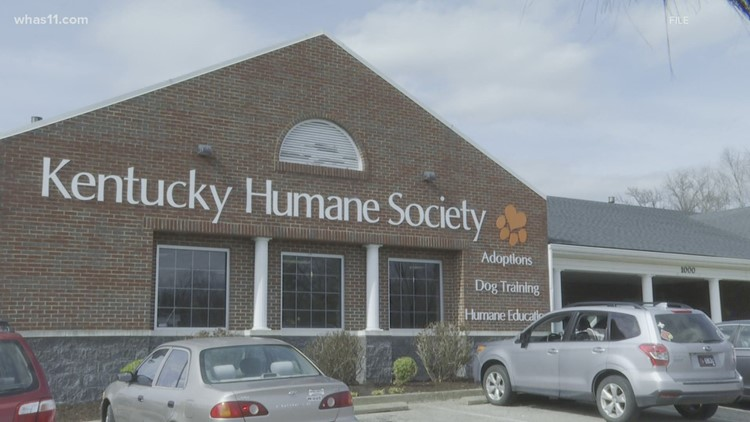 KHS takes in over 60 shelter animals displaced by Hurricane Ida
