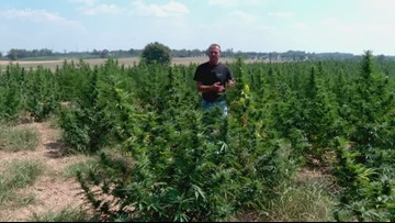 3 arrested for stealing hemp plants