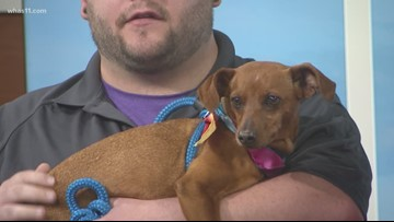 Pet of the Week: Meet this small dog looking for forever home