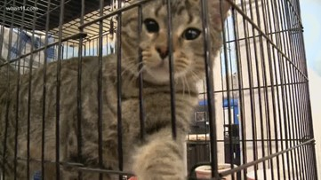 2019 marks 'year of the cat' for Kentucky Humane Society