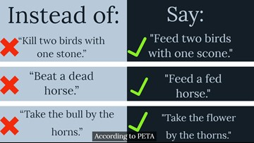 PETA offers replacement sayings for the 'anti-animal language' in daily conversations
