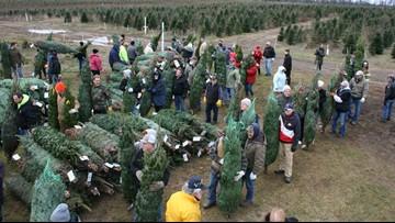 Farm donates 465 Christmas trees to military families